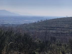 Terreno agricolo Caserta 50 ha in Vendita